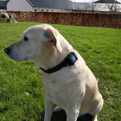 Zenztracker MINI - GPS til hund